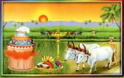 National Thaipongal Day celebration in Nuwara Eliya tomorrow