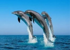 Killing dolphins; Minister orders suspension of beach seine operator's permit