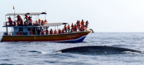 Don't rip-off foreigners coming for Whale Watching - Fisheries Minister