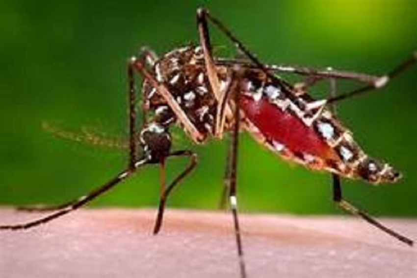 Another Dengue Outbreak