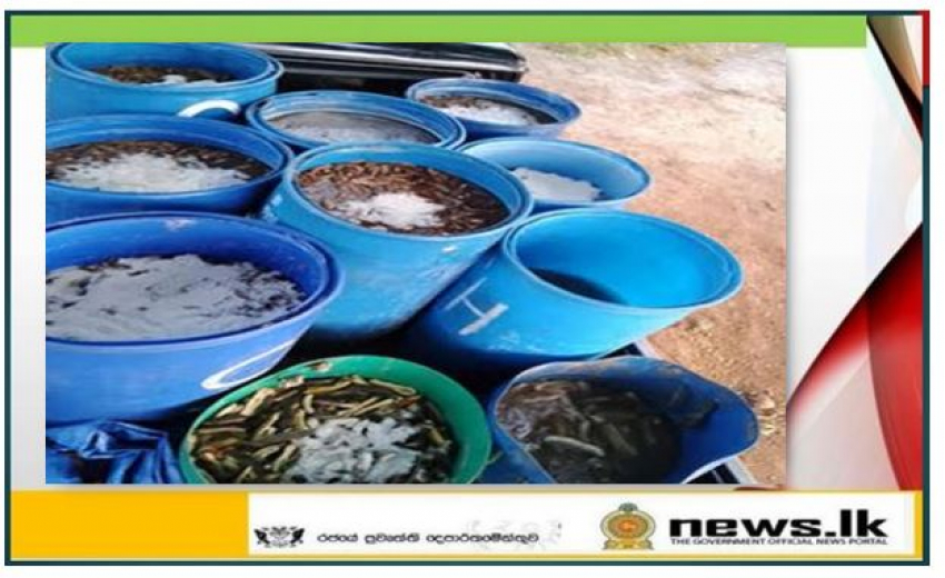 Navy takes hold of over 72000 illegally transported sea cucumber stock with 02 suspects