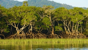 Lanka to give leadership for Mangrove Conservation in Commonwealth