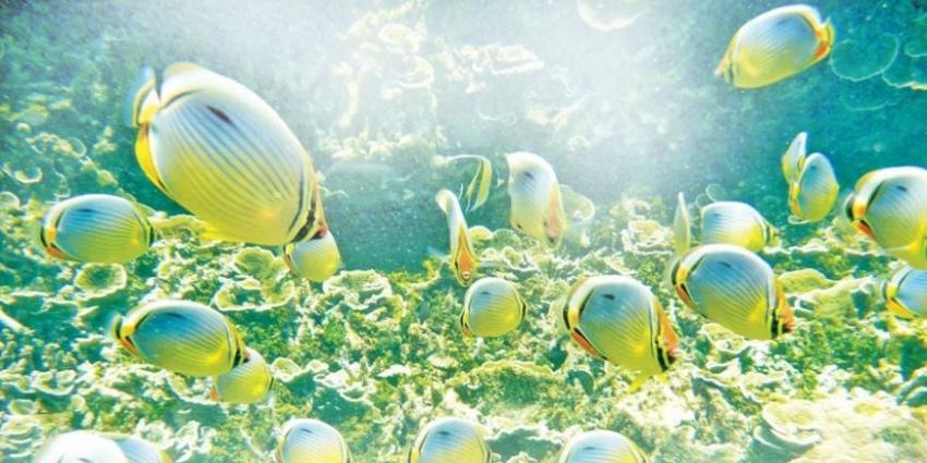 Kayankerni Marine Sanctuary: Ecological grandeur