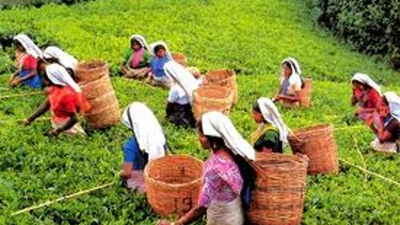 Estate workers to get Rs.800 daily wage