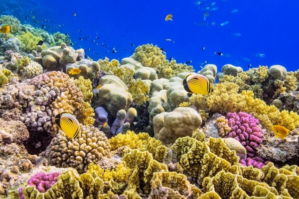 Coral reef restoration  commences in the North