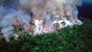 Amazon fires: Fines for environmental crimes drop under Bolsonaro