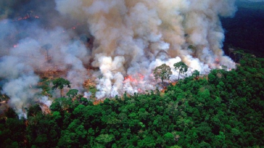 Amazon fires: Fines for environmental crimes drop under Bolsonaro