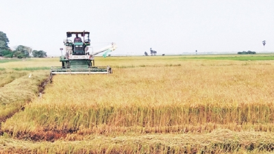 Ampara paddy farmers receive bumper harvest
