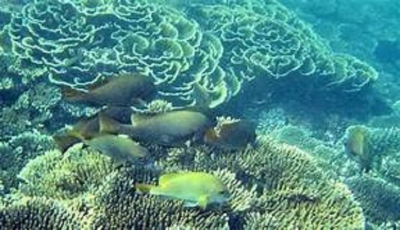 US$ 19.3M  Project to Conserve Kalpitiya Bar Reef