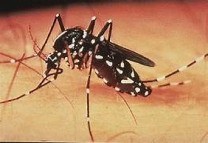 Ministry warns of Dengue outbreak