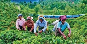 April 2018 tea exports up on last year