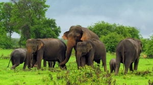 Trial-at-Bar to hear elephant trafficking case