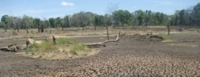 Dry rations for drought affected in A'pura District