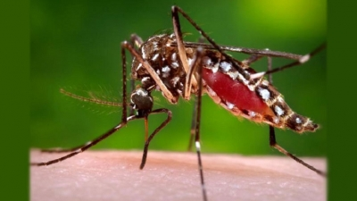 29,123 dengue cases reported Island-wide
