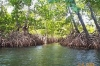 To rehabilitate mangrove lands used for aquaculture and salterns