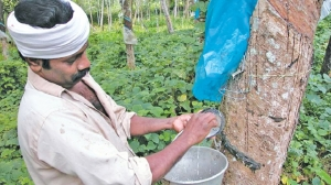 Impact of declining Rubber production to the economy