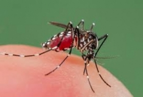 Tri forces support National Dengue Prevention Week