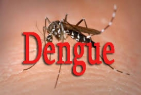 Think more about dengue : A tiny bite can  take your life