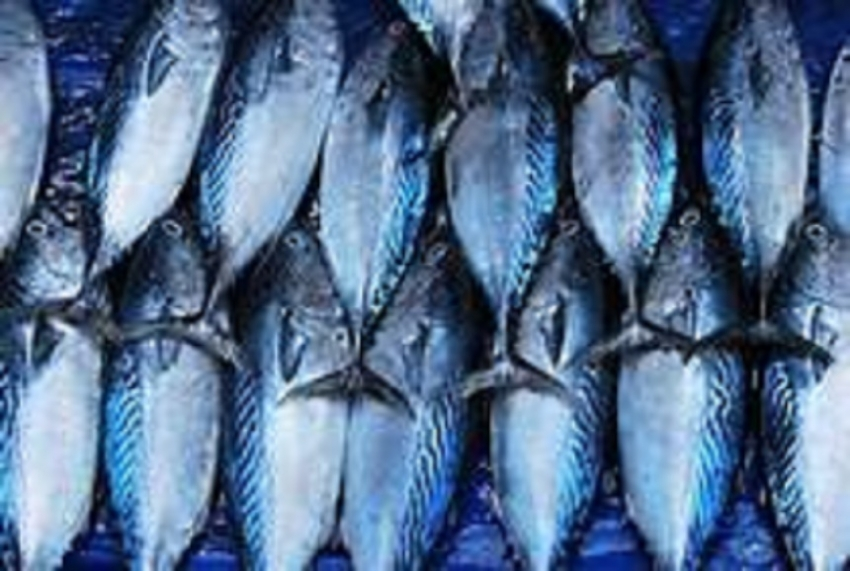 Sri Lanka fish exports up