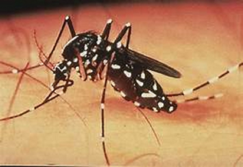 Dengue still on the rise in 7 districts