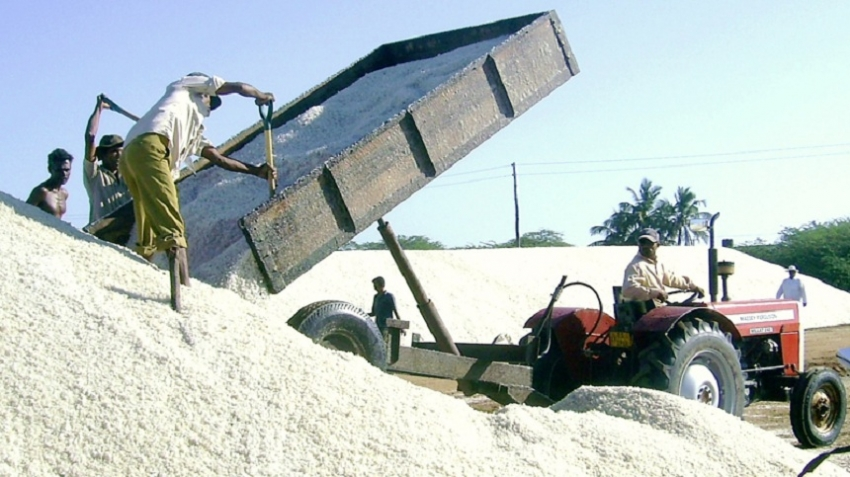 Salt harvesting begins in H'tota