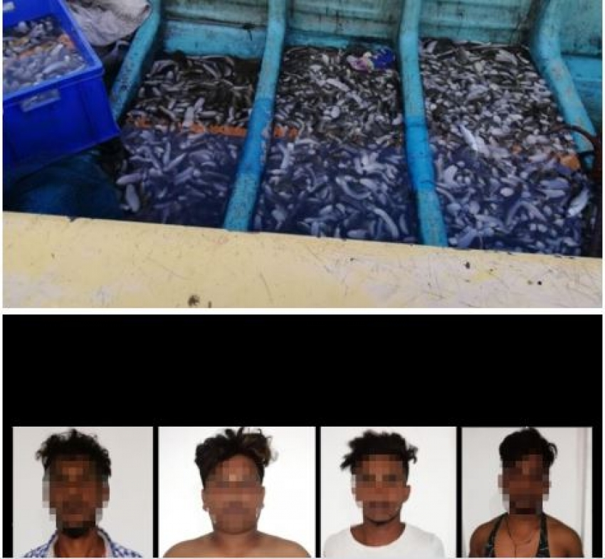 Navy apprehends 04 persons for illegal harvesting of sea cucumber