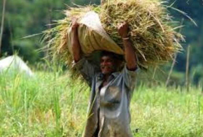 Army facilitates PMB to buy over 3.2 m kilos of paddy worth Rs. 163.4m