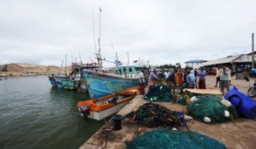 Fisheries harbours dengue free
