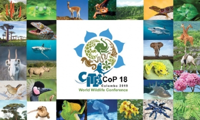 CITES to Combatting illegal wildlife trade